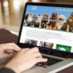 Tips Memilih Jasa Pembuatan Website di Banjarmasin