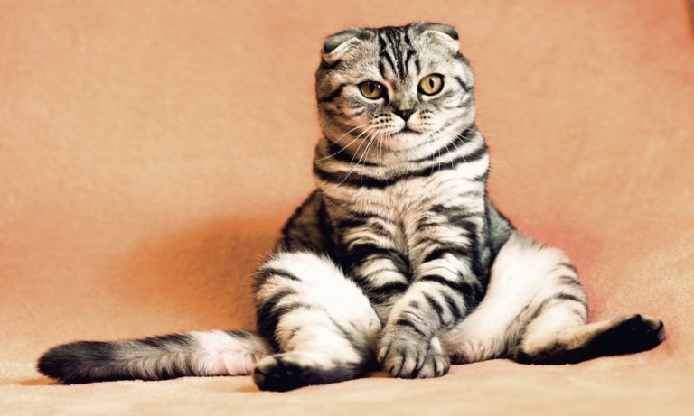 Cara Merawat Kucing Rumahan